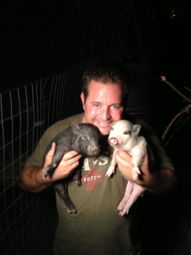 Re-Homed these two full potbelly pigs on the same day in So. California! Sept. 2013